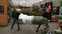 Adie en Marieke van Welkoop Hasselt trekken een net om een kerstboom